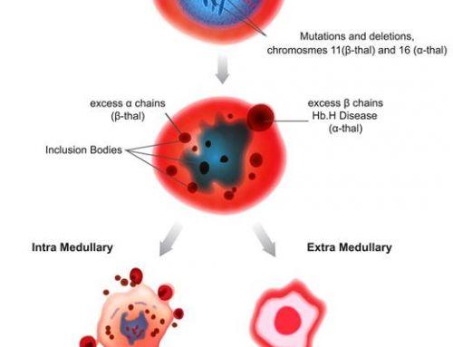 Stem Cell untuk Thalassemia